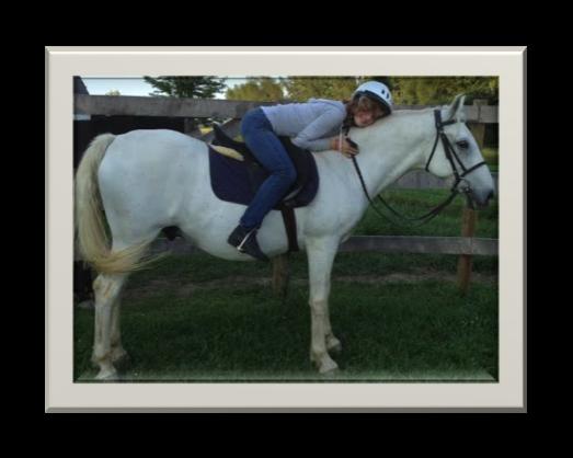 Equine3